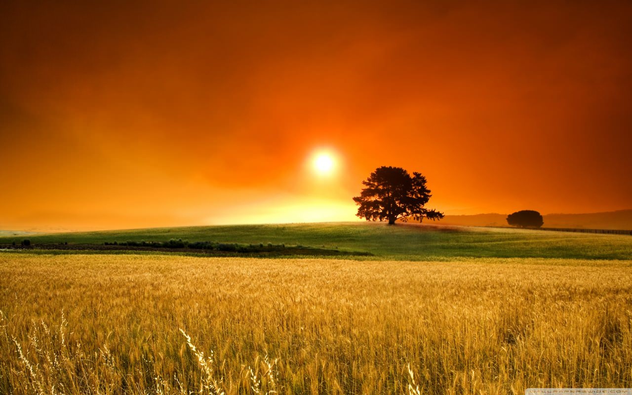 summer_sunset_2-wallpaper-1280x800