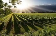 Magični svet vina levačkog vinogorja - Vinarija Lastar